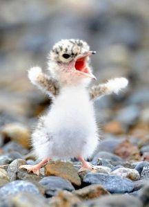 babybirdwalking