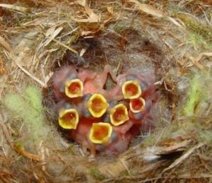sevenbabybirds