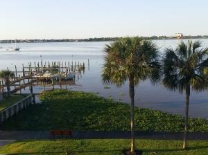 lake with water hyacinth